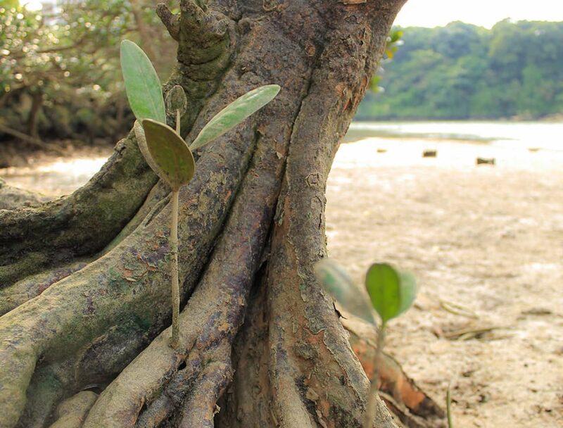 【沖縄本島・中部】初心者の方大歓迎!亜熱帯の自然を満喫マングローブSUPツアー(No.137)