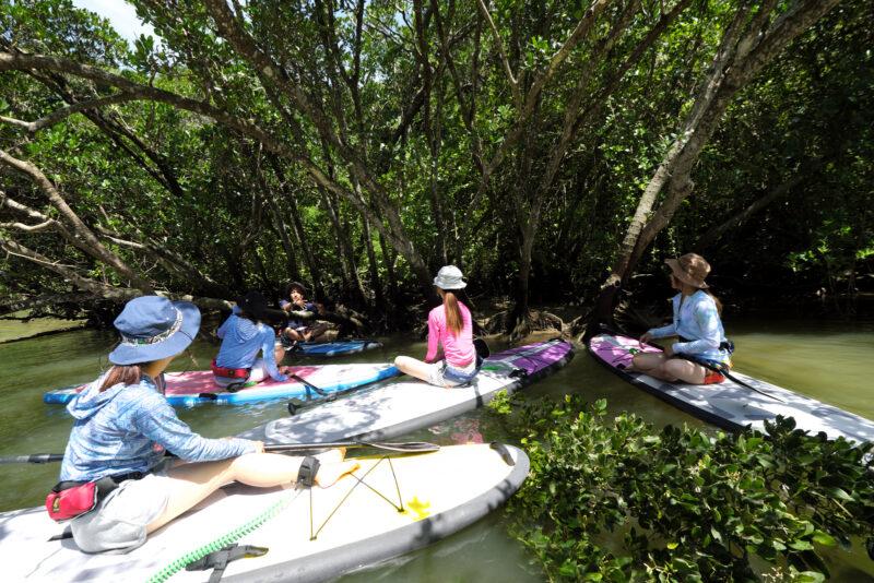 【沖縄本島・中部】3密回避で沖縄の自然を楽しもう!マングローブSUPツアー(写真データプレゼント付き)(No.144)
