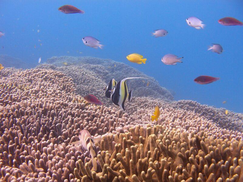 「青の洞窟」シュノーケル&サンゴいっぱい体験ダイビング(No.107)
