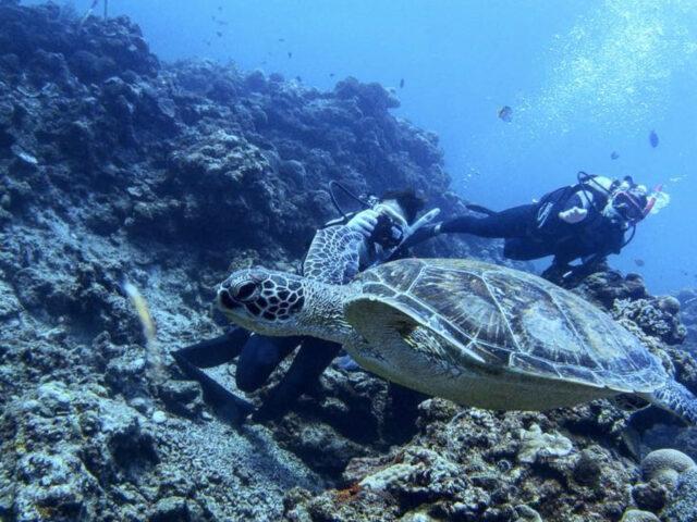 青の洞窟体験ダイビングでウミガメと泳ぐ