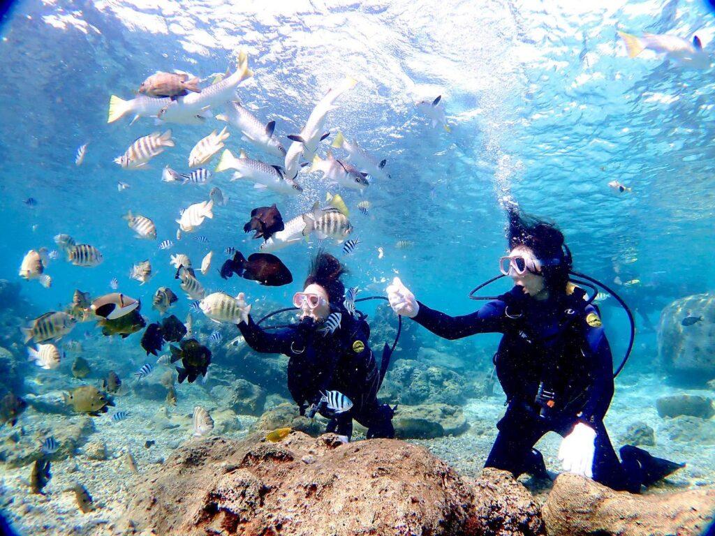 カラフル熱帯魚とダイビング