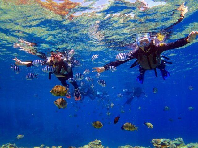 青の洞窟シュノーケリング,ツアー,熱帯魚,
