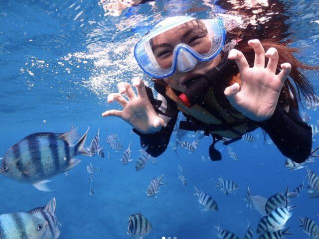 カラフル熱帯魚とシュノーケル