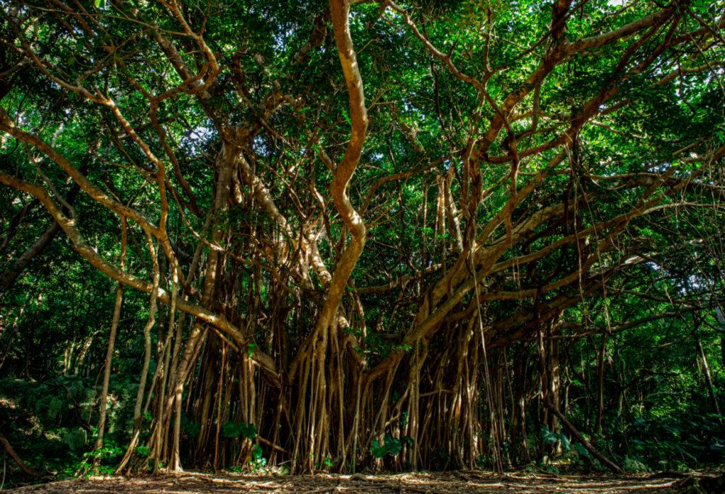 恩納村の森