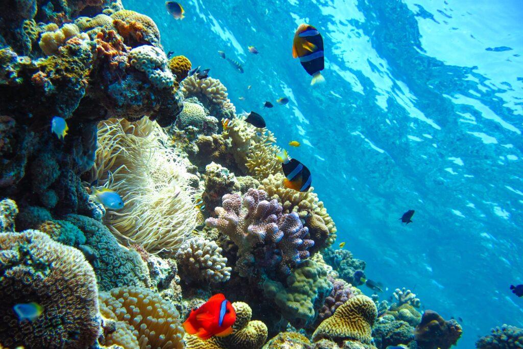 恩納村の青の洞窟で見られる熱帯魚