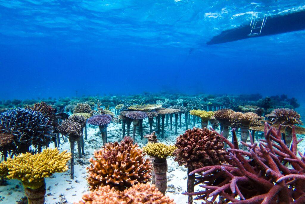 恩納村で見られるサンゴ礁