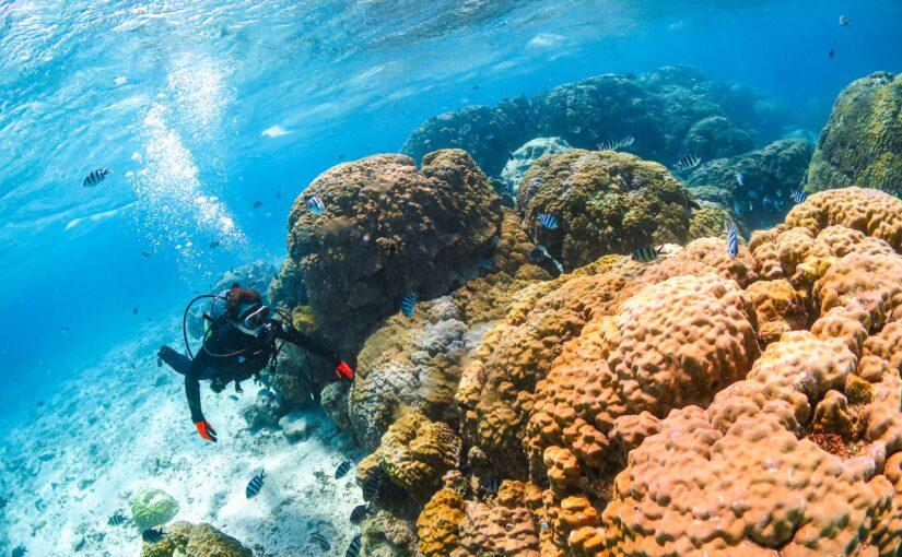 沖縄でダイビングを楽しむ人