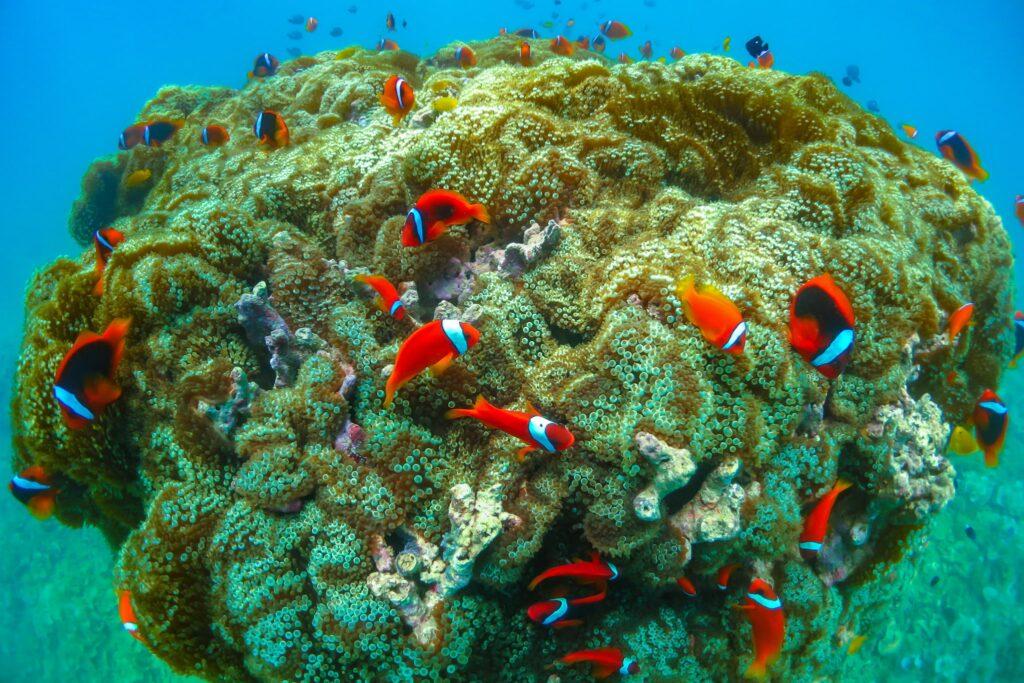 沖縄・恩納村で見られる熱帯魚
