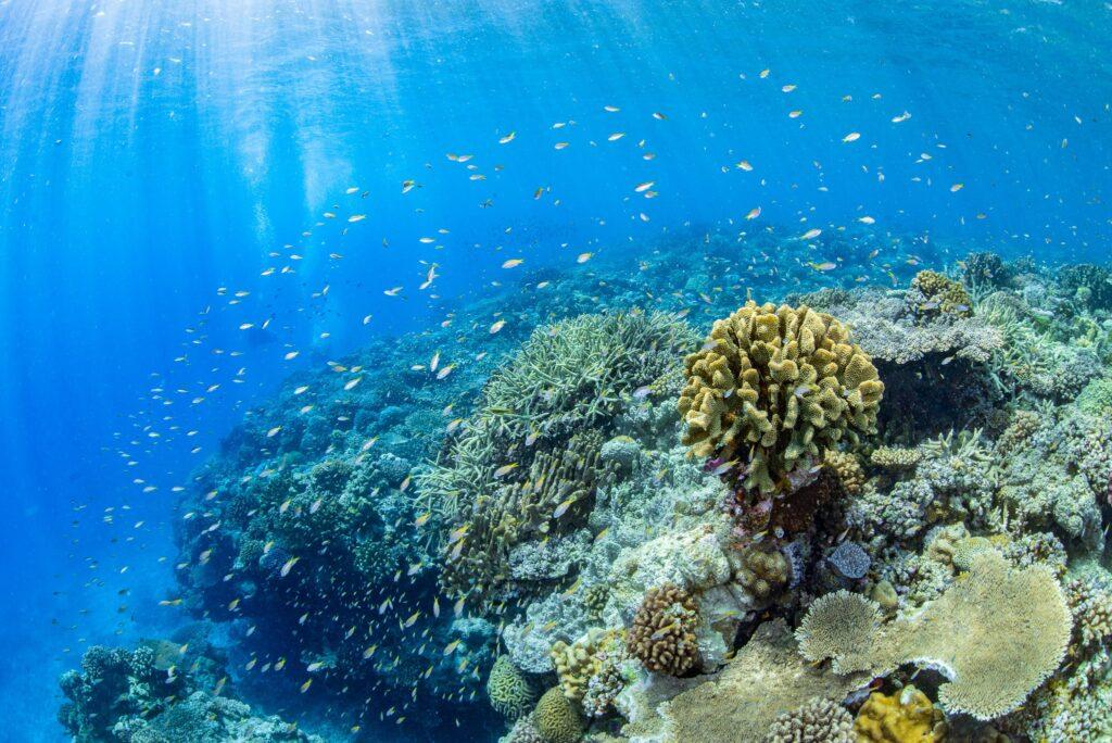 沖縄・恩納村の海で見られるサンゴ礁
