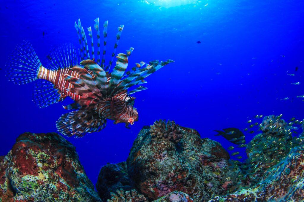 沖縄・恩納村で見られる深海魚