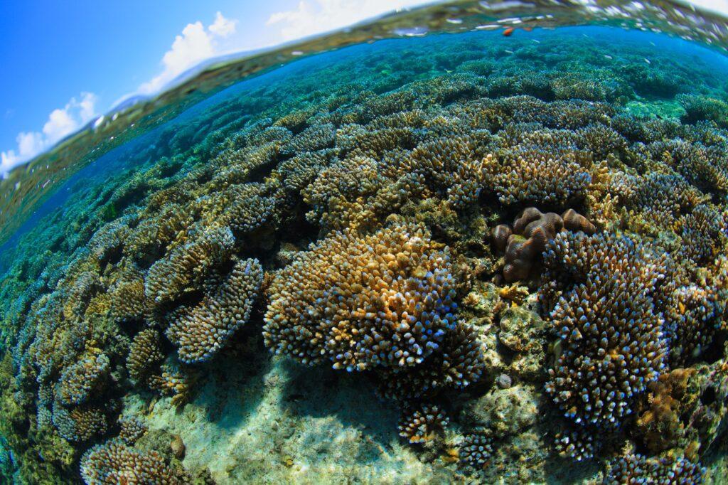 沖縄・恩納村に生息するサンゴ礁