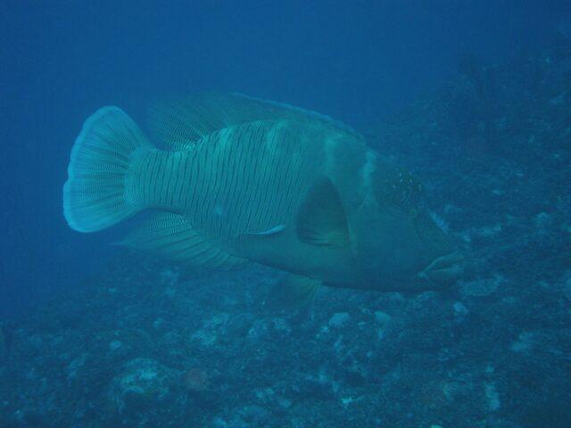 海底鍾乳洞辺戸岬を潜る