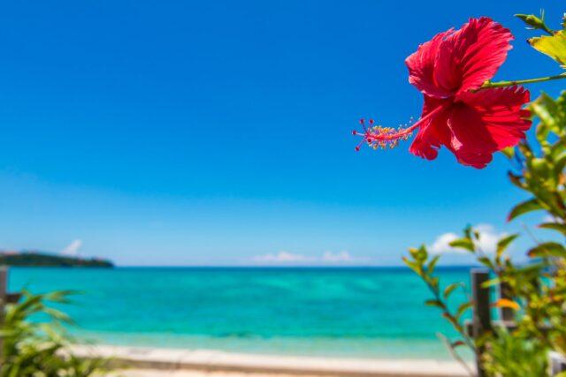 沖縄で見られるハイビスカス