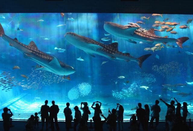 バスツアーで回る美ら海水族館